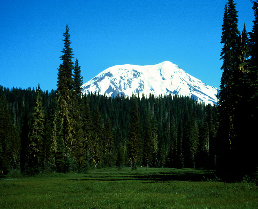 Mt. Adams from Adams Meadows